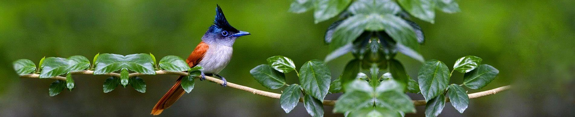 Check birds in Sri Lanka with Birdwatching package from the finest Travel Agents in Sri Lanka