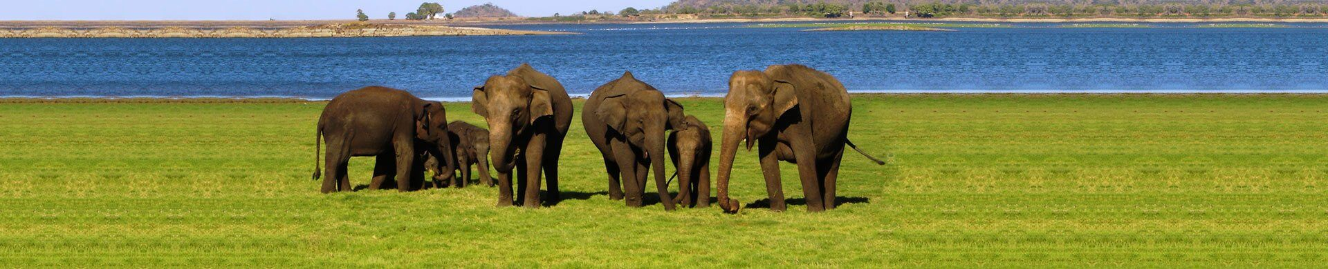 Check elephants in Sri Lanka with Nature Package from the finest Travel Agents in Sri Lanka
